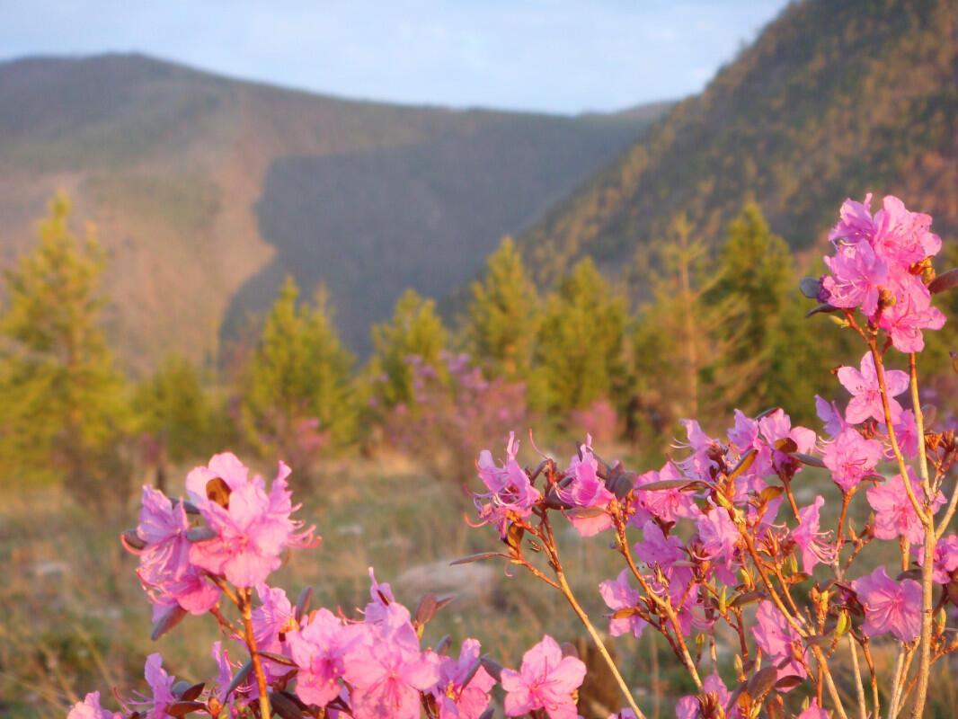 капуцинов брно цветы и птицы фотографии озера байкал связи